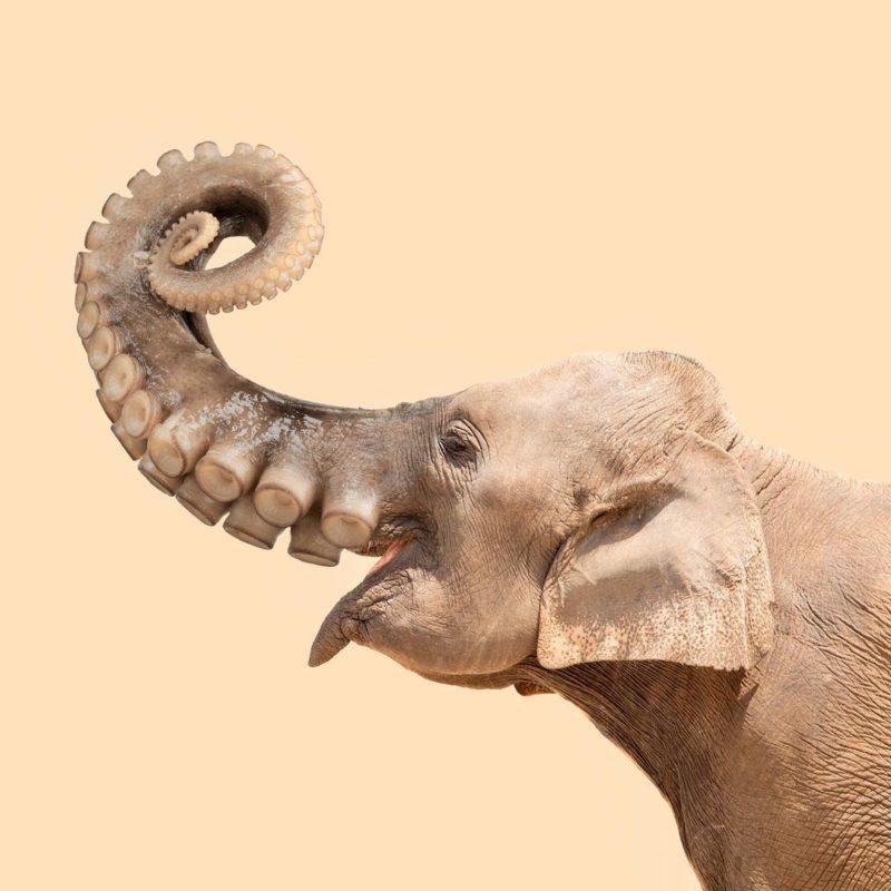 Octophant, elepus, poulpiphant or ...? - Les Créatonautes